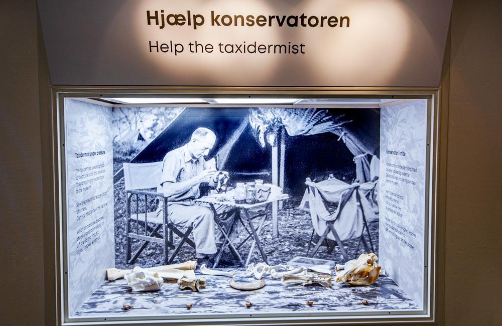 Naturhistorisk museum konservatoren 1000