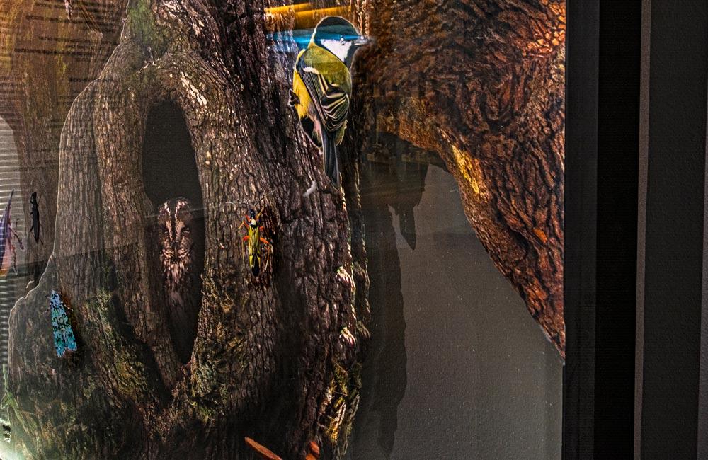 Foliedekoration bag glasmontre til Naturhistorisk Museum - Nonbye A/S