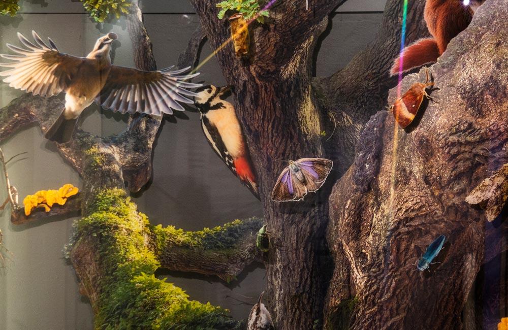 Foliedekoration for Naturhistorisk Museum - Nonbye A/S